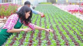 Jardineros que trabajan en el invernadero almacen de metraje de vídeo