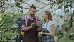 Jardineros sonrientes jovenes de los pares del blogger en el delantal que sostiene la flor que hablan y blog video de registració almacen de video