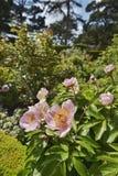 jardines imagenes de archivo