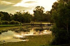 Jardines botánicos de Gold Coast Imágenes de archivo libres de regalías