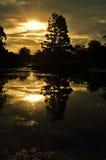 Jardines botánicos de Gold Coast Foto de archivo