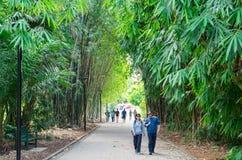 Jardines botánicos de la ciudad en Brisbane central, en Queensland, Australia Fotos de archivo libres de regalías
