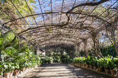 Jardines botánicos de Málaga Imagen de archivo libre de regalías