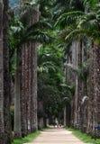 Jardines botánicos de Rio de Janeiro Imagen de archivo libre de regalías