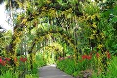 Jardines botánicos de Singapur Imagenes de archivo