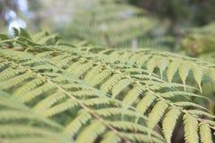 Jardines botánicos nacionales, Canberra, Australia Imagen de archivo libre de regalías
