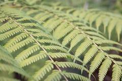 Jardines botánicos nacionales, Canberra, Australia Foto de archivo libre de regalías