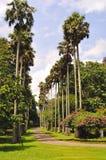 Jardines botánicos reales. Sri Lanka imagen de archivo libre de regalías