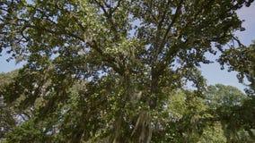 Jardines/Carolina del Sur/los E.E.U.U. de Brookgreen almacen de metraje de vídeo