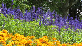 Jardines de flores Foto de archivo