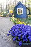 Jardines de Keukenhof Imagenes de archivo