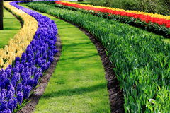 Jardines de Keukenhof Foto de archivo