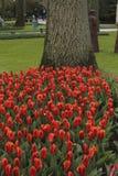 Jardines de Keukenhof en los Países Bajos Fotos de archivo libres de regalías