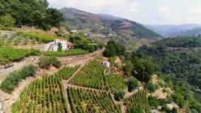 Jardines de la visión aérea en terraza en el valle del Duero metrajes