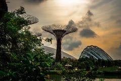 Jardines de Singapur Imagen de archivo libre de regalías