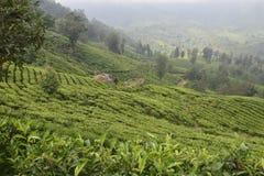 Jardines de té en la India Imagenes de archivo
