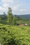 Jardines de té en la India Fotos de archivo