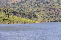 Jardines de té en Munar imagen de archivo