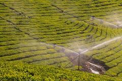 Jardines de té en Munar imágenes de archivo libres de regalías