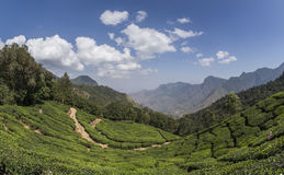 Jardines de té en Munnar, Kerala, la India imagenes de archivo