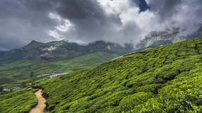 Jardines de té en Munnar, Kerala, la India fotos de archivo libres de regalías