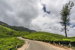 Jardines de té en Munnar, Kerala, la India imágenes de archivo libres de regalías