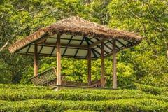 Jardines de té de Ooty en el estado del té Imágenes de archivo libres de regalías