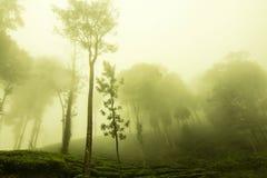 Jardines de té de Ooty en el estado del té frontera del wayanad Fotos de archivo