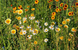 Jardines de Vandusen de los Wildflowers imagenes de archivo