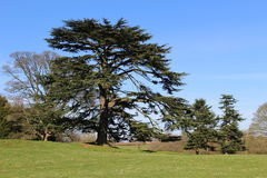 Jardines del castillo de Astley Imagen de archivo libre de regalías