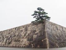Jardines del este del palacio imperial, Tokio, Japón fotos de archivo libres de regalías