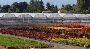 Jardines del invernadero Foto de archivo libre de regalías