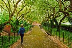 Jardines del invernadero de Central Park fotografía de archivo libre de regalías