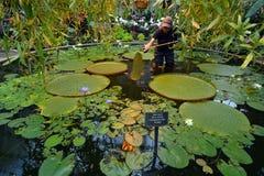 Jardines del invierno de Auckland en Auckland Nueva Zelanda Imagen de archivo libre de regalías