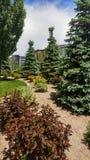Jardines del pino Foto de archivo