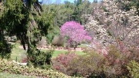 Jardines en Carolina Mountains del norte Foto de archivo libre de regalías