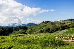 Jardines en la montaña Fotografía de archivo