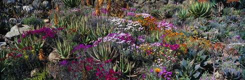 Jardines en resorte Fotografía de archivo