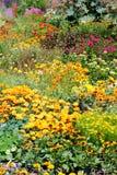 Jardines florecientes. Foto de archivo