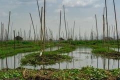 Jardines flotantes en el lago Inle, Myanmar Foto de archivo libre de regalías