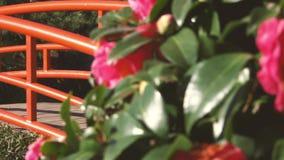 Jardines japoneses en Toowoomba almacen de metraje de vídeo