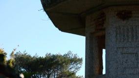 Jardines japoneses en Toowoomba almacen de video