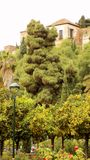 Jardines Málaga Andalucía España del oscura de Puerta Foto de archivo