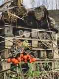 Jardines ocultados imagenes de archivo