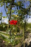 Jardines orgánicos Warwickshire midlands Inglaterra del ryton del ryton del jardín Fotos de archivo