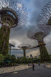 Jardines por la bahía Singapur Imagen de archivo libre de regalías