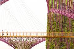 Jardines por la bahía - Singapur Imagen de archivo libre de regalías