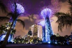 Jardines por la bahía, Singapur de la noche Imagenes de archivo