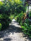 Jardines tropicales Fotos de archivo libres de regalías