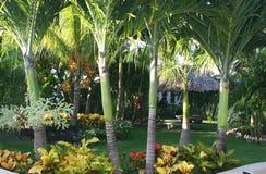 Jardines tropicales del centro turístico Imagen de archivo